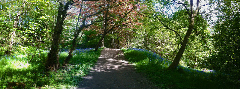 Quick iPhone pano in Ilkley's 'Bluebell Woods'. Well, at least that's what we call this place.