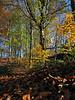 Bright November morning in 2010. Woods near Riddlesden.