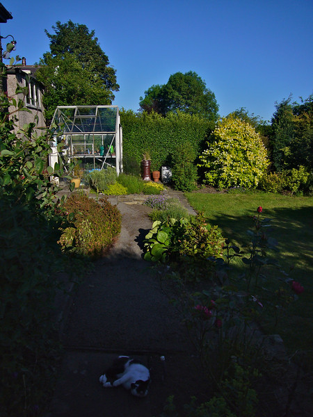 This is how the garden looks in June 2011