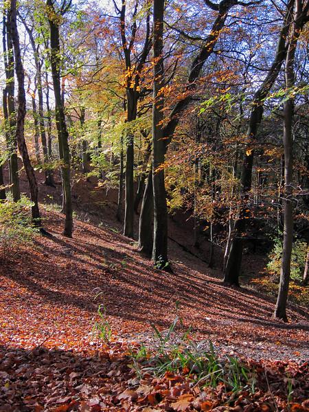 Bright November morning 2010. Woods near Riddlesden.