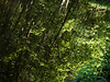 Skip Woods near Skipton
