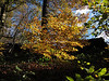 Bright November morning 2010.. Woods near Riddlesden.