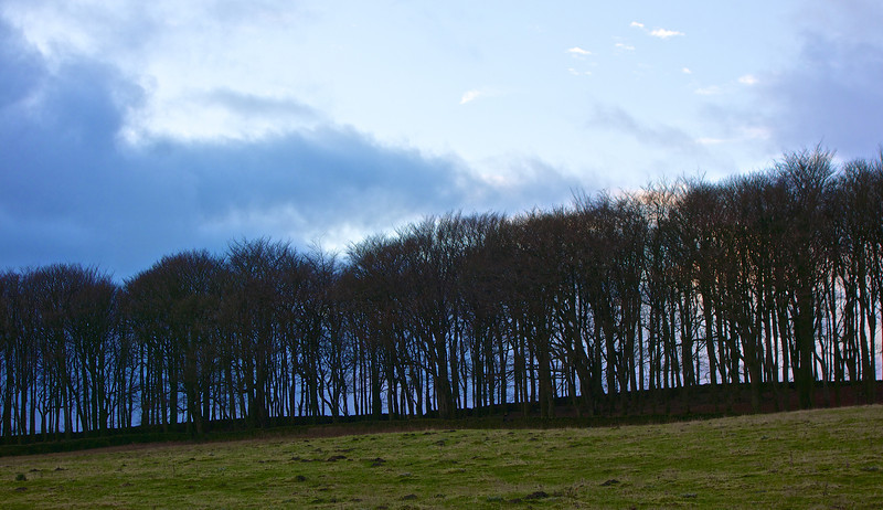 Trees above Riddlesden on New Year's Day 2013