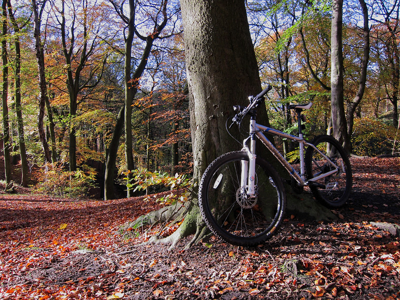 Bright November morning in 2010. Woods near Riddlesden.