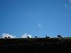 Bright November morning in 2010. Sheep above Brunthwaite.