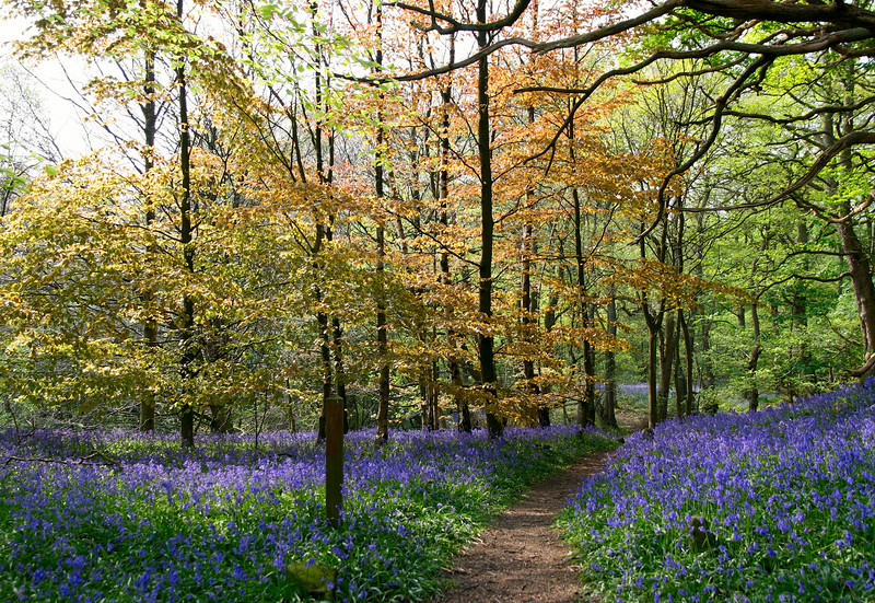 Ilkley woods