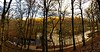 Strid Woods, Bolton Abbey