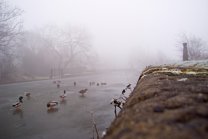 Ducks on icy canal