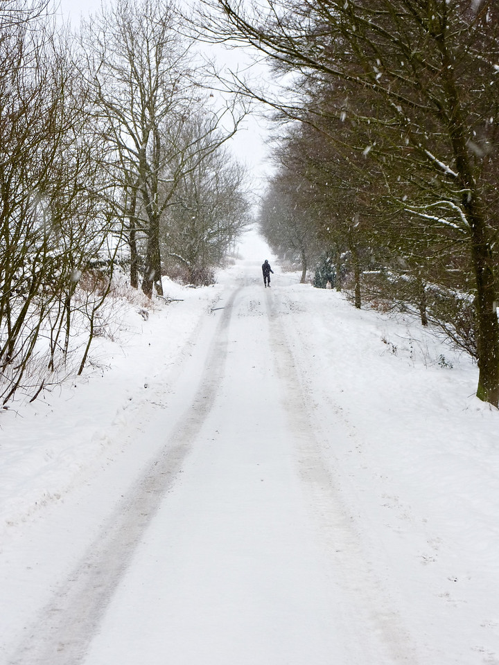 Man walking dog in snow