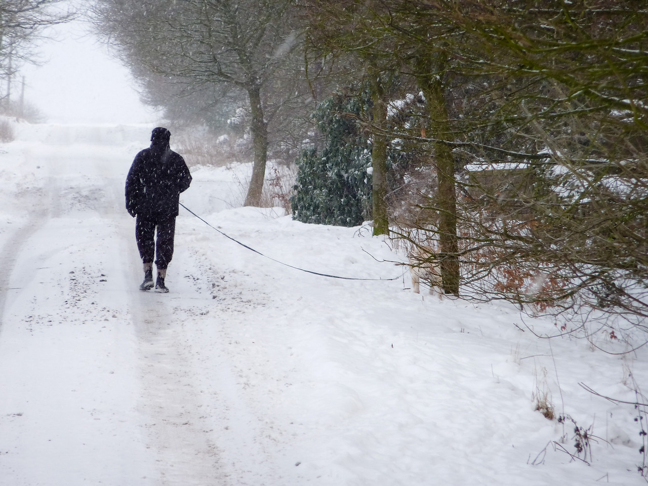 Man walking dog, Ilkley Road, heading towards Keighley Gate.