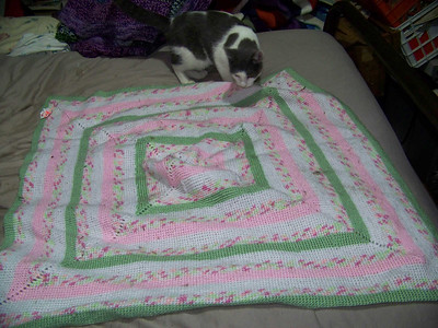 Miss Kitzie inspecting a blanket I made for a friend's new baby,  December 2008