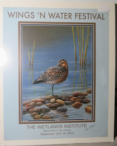 Red Knot poster by Ron Orlando that I won in a raffle