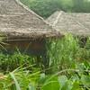 Marsh dwelling