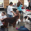 """Pet Your Stress Away Day"" with a therapy dog was part of the  inaugural De-Stress Fest for a Healthy Mind events at Perry High School. {Photo by Chad Felton-The News-Herald}"