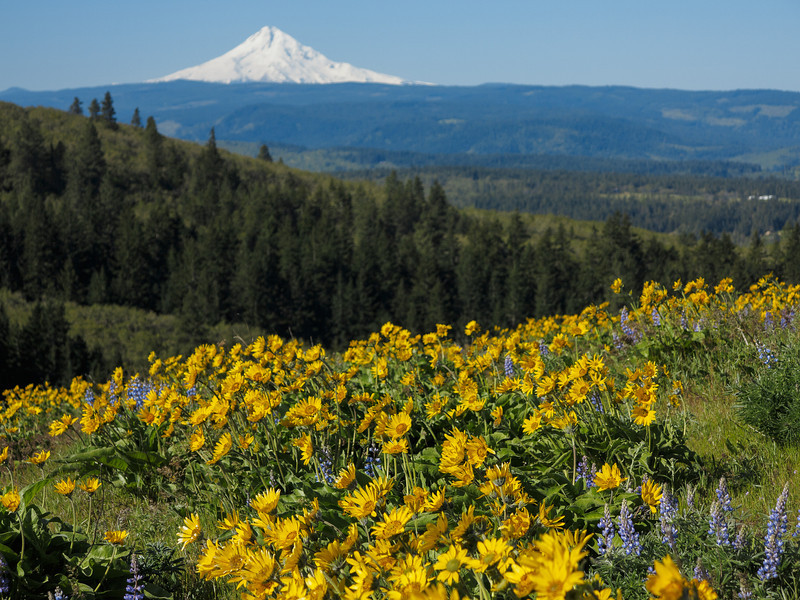 Mount Hood from Tom McCall Point