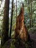 Siouxon Creek Trail