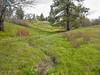 Meadow near Catherine Creek