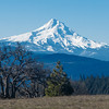 Mount Hood seen from Tracy Hill