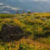 Balsamroot and lupine at Tom McCall Preserve