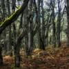 Oak grove on Tracy Hill