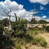 Desert scene, Canyonlands NP