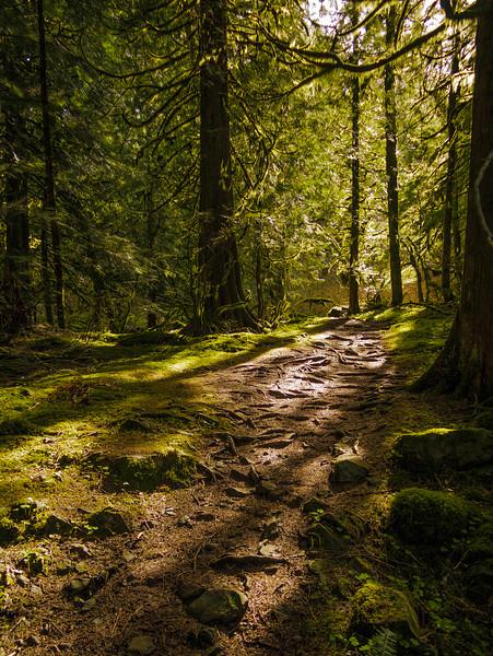 Path near Wahkeena Spring