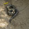 Rattlesnake at McCall Point