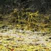 Moss and lichen along Eagle Creek