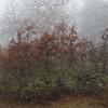 Tracy Hill in fog