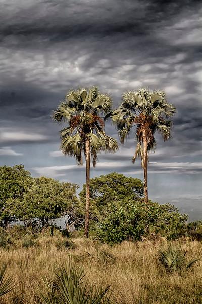 _MG_1200   Okavango Delta
