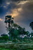 _mg_1176 Okavango Delta