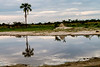 _MG_1328 okavango delt landscape