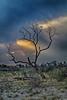 _MG_1165 Okavango Delta