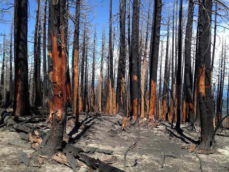 Aftermath of Dollar Lake Fire on Mount Hood