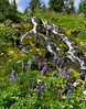 There are numerous waterfalls and cascades lined with flowers