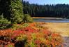 Fall colors at Junction Lake