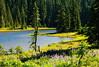 Lupine blooming at Junction Lake