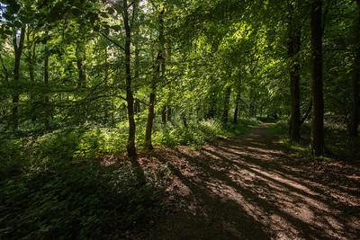 Cowleaze Woods 10 mins away