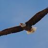 spring eagle