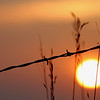 barbwire sunset