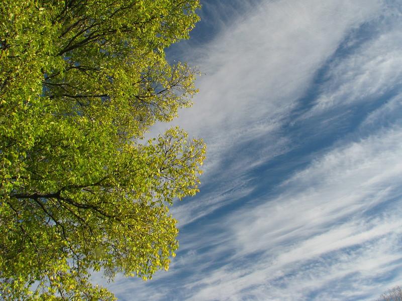 fall sky scene