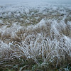 Heavy frost and fog on wetlands before dawn