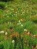 Flowers near Elk Cove