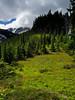 Meadow along Vista Ridge Trail