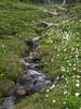 Stream in Wy'East Basin