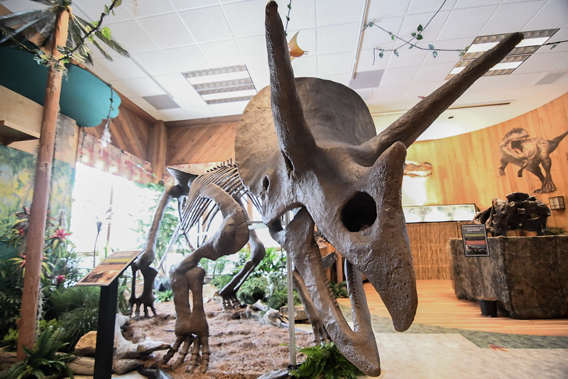 Eric Bonzar—The Morning Journal<br /> The indoor dinosaur discovery display allows guests to learn about Paleontology .