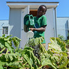 Eric Bonzar—The Morning Journal<br /> Eleven-year-old Teon Lenor waters the vegetables.