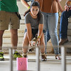 """Eric Bonzar—The Morning Journal<br /> Eleven-year-old Bella Collins, of Vermilion, and """"Zoey"""" compete in the fowl race at the Lorain County Fair, Aug. 26, 2016."""