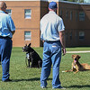 """Eric Bonzar—The Morning Journal<br /> A pair of  inmates work on the commands """"sit"""" and """"stay"""" with their trainee dogs in the yard of the Grafton Correctional Institution, Sept. 15, 2016."""