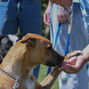 Eric Bonzar—The Morning Journal<br /> A trainee dog gives his inmate trainer his paw, in exchange for a treat, during a Love-A-Pup prison dog training session at the Grafton Correctional Institution, Sept. 15, 2016. The collaborative training program, between Friendship Animal Protective League of Lorain County and the staff and inmates of Grafton Correctional Institution, has worked for the last 16 years to rehabilitate dogs in an effort to release them back into society.